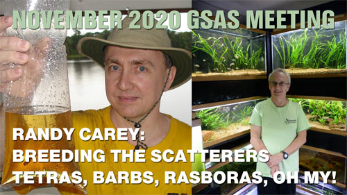 Breeding the Scatterers - Randy Carey - Tuesday, November 10, 2020
